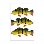Peacock bass Posters
