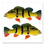 Peacock bass Square Car Magnet 3