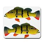 Peacock bass Mousepad