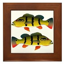 Peacock bass Framed Tile