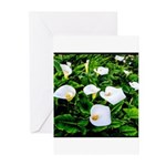 Field of Calla Lily Flowers Greeting Cards