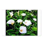 Field of Calla Lily Flowers Postcards (Package of