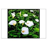 Field of Calla Lily Flowers Poster