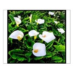 Field of Calla Lily Flowers Small Poster