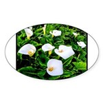 Field of Calla Lily Flowers Sticker