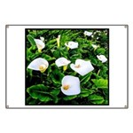 Field of Calla Lily Flowers Banner