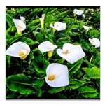 Field of Calla Lily Flowers Square Car Magnet 3