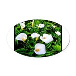 Field of Calla Lily Flowers Oval Car Magnet