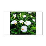 Field of Calla Lily Flowers Car Magnet 20 x 12