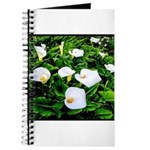 Field of Calla Lily Flowers Journal