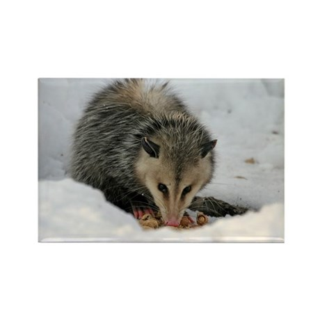 A Possum In The Snow Rectangle Magnet