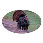 Strutting Tom Turkey Oval Sticker