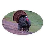 Strutting Tom Turkey Oval Sticker (50 pk)
