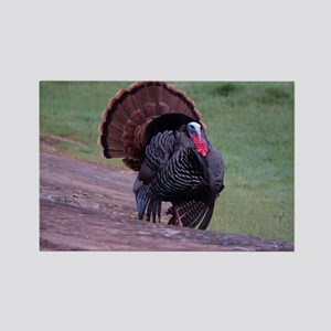 Strutting Tom Turkey Rectangle Magnet