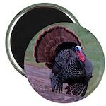 Strutting Tom Turkey Magnet