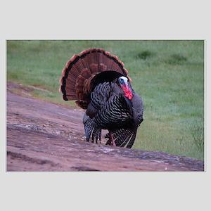 Strutting Tom Turkey Large Poster