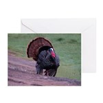 Strutting Tom Turkey Greeting Cards (Pk of 10)