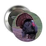 """Strutting Tom Turkey 2.25"""" Button"""