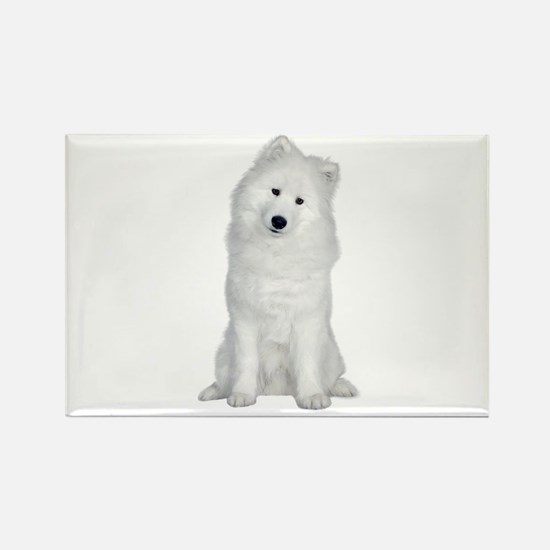 Samoyed Picture - Rectangle Magnet (10 pack)
