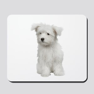 Maltese Picture - Mousepad