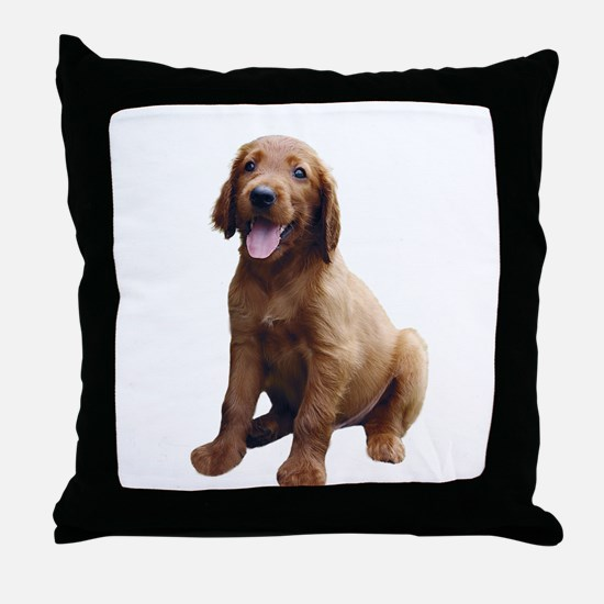 Irish Setter Picture - Throw Pillow