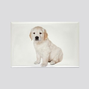 Golden Retriever Picture - Rectangle Magnet (10 pa