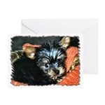 ...Yorkshire Terrier 01... Greeting Cards (Pk of 1