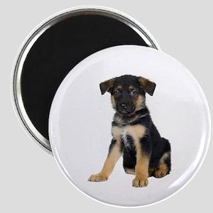 """German Shepherd Picture - 2.25"""" Magnet (10 pack)"""