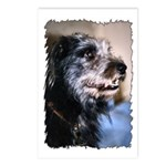 ...Dog 02... Postcards (Package of 8)