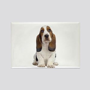 Basset Hound Picture - Rectangle Magnet (10 pack)