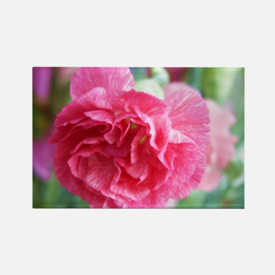 Pink Carnation Rectangle Magnet