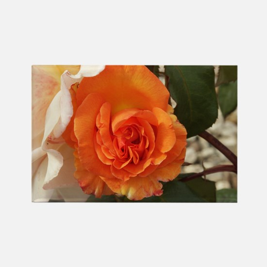 Orange Rose Rectangle Magnet