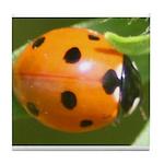 Ladybug Beetle Tile Coaster