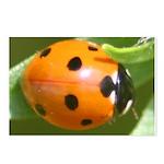 Ladybug Beetle Postcards (Package of 8)