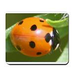 Ladybug Beetle Mousepad