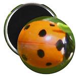 Ladybug Beetle Magnet
