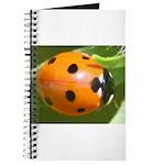 Ladybug Beetle Journal