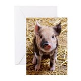 Piglet Greeting Cards (20 Pack)