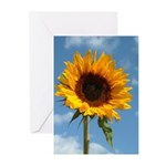 Sunflower Greeting Cards (Pk of 20)