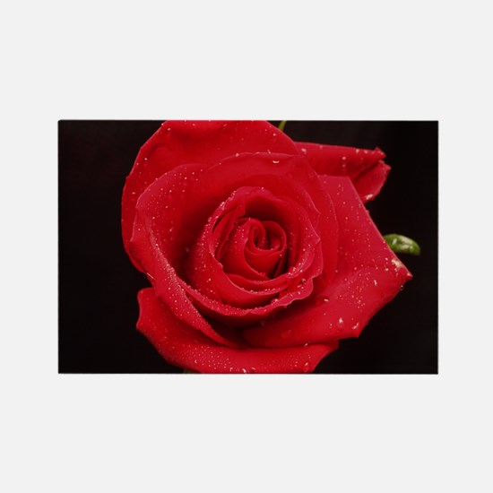 Red Rose Rectangle Magnet