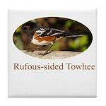 Rufous-sided Towhee Tile Coaster