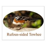Rufous-sided Towhee Small Poster