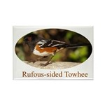 Rufous-sided Towhee Rectangle Magnet (100 pack)