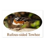 Rufous-sided Towhee Postcards (Package of 8)