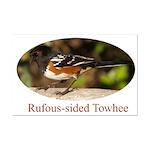 Rufous-sided Towhee Mini Poster Print