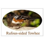 Rufous-sided Towhee Large Poster