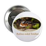 Rufous-sided Towhee 2.25