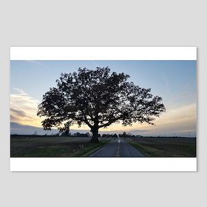 Old Oak Tree Postcards (Package of 8)