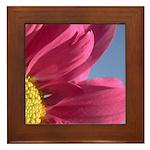 Pink Gerbera Daisy Framed Tile