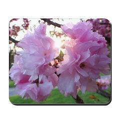 Kwanzan Cherry Blossoms Mousepad
